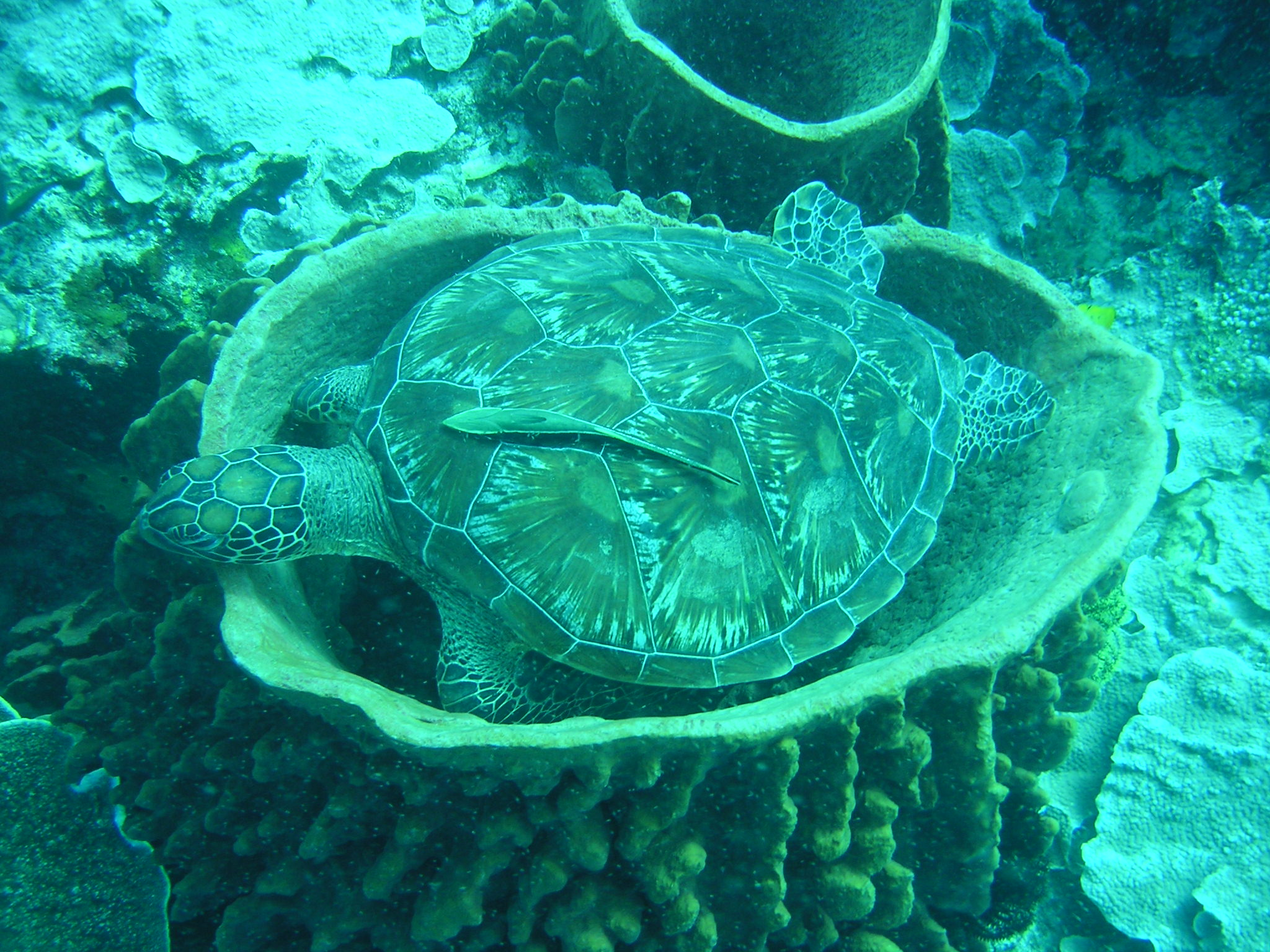Sea turtles in the Pacific – lanyu.land