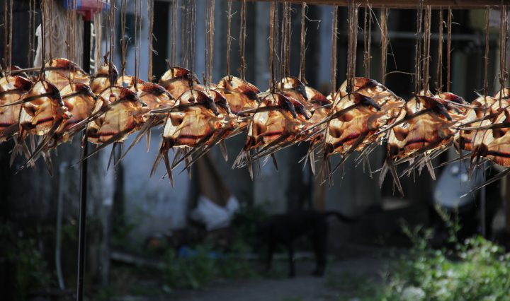 flying fish hanged to dry